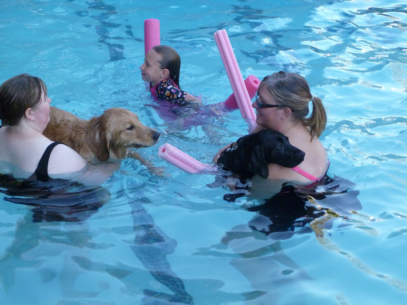 Puppy Pool Party Pool Party Fun